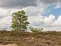 Balloërveld, natuurgebied in Drenthe 09.jpg