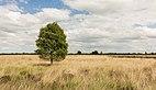 Balloërveld, natuurgebied in Drenthe 30.jpg
