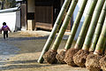 Bamboos for the torches of Todaiji Shunie 201502 02.jpg