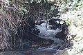 Banias river (71).jpg