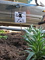 Banksys flower thrower in the Flying Pigeon LA Guerilla Garden.jpg