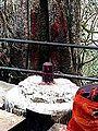 Barabar Caves - Linga and Tree (9227461188).jpg