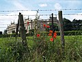 Barbed wire and poppies. - geograph.org.uk - 507836.jpg