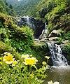 Barbotey Rock Garden, Darjeeling 2.jpg