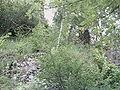 Barnave (ruines).JPG