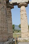 Basilica di Paestum 08.jpg