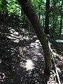 Battle Creek Cypress Swamp 63.jpg