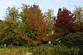 Beale Arboretum lakeside trees - West Lodge Park - Hadley Wood Enfield London.jpg