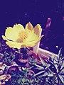 Beauty of close up flower.jpg
