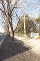 Bentinck Street Elm Trees 1.jpg