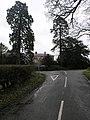 Big Trees and Farm - geograph.org.uk - 346638.jpg