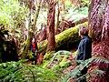 Billie and Rappie in Rainforest 2400.jpg