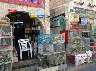 Souq Waqif - Caged birds in front of bird shops in Souq Waqif