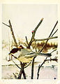Birds and nature in natural colors (Plate 6) (6234314958).jpg
