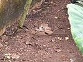 Birds at ZooParc de Beauval 07.JPG