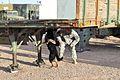 Bliss hosts FORSCOM military working dog recertifications 120208-A-CJ175-063.jpg