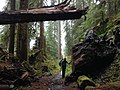 Blogging from the Olympic Peninsula (22209760584).jpg
