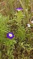 Blume 7.jpg