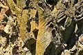 Bochum - Geologischer Garten (08) 02 ies.jpg