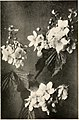 Bog-trotting for orchids (1904) (20198978238).jpg