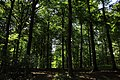 Bois du Pottelberg - Pottelbergbos 07.jpg