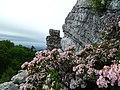 Bonticou Laurel - panoramio.jpg
