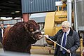 Boris Johnson pulling a bull in Aberdeen.jpg