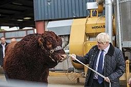 Boris Johnson pulling a bull in Aberdeen