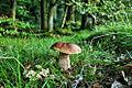 Bornholm - mushroom.jpg