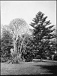 Botanic Gardens, Sydney (2532450487).jpg