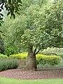 Bottle-tree-01.JPG