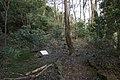 Bowral NSW 2576, Australia - panoramio (125).jpg