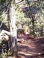 Boynton Canyon Trail, Sedona, Arizona - panoramio (15).jpg