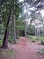 Branksome, Martello Woods - geograph.org.uk - 1427570.jpg