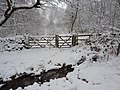 Bridleway into a wood - geograph.org.uk - 1631950.jpg