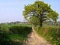 Bridleway to Pelsham - geograph.org.uk - 400222.jpg