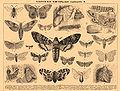 Brockhaus and Efron Encyclopedic Dictionary b4 610-2.jpg