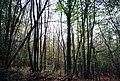 Brown's Wood - geograph.org.uk - 1564862.jpg