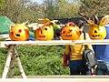 Bucuresti, Romania. Pumpkin Fest. Primul Festival de Halloween din Romania. Oct. 2019. Capatane de dovleci sculptate.jpg