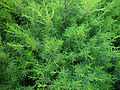 Bushy green background.jpg
