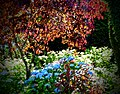 Butchart Gardens - Victoria, British Columbia (28985113611).jpg