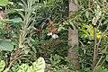 Butterfly Rainforest FMNH 38.jpg