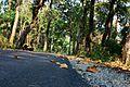 Buxa Tiger Reserve, West Bengal.jpg