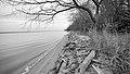 CA winter along the Potomac shoreline cropped (8330937148).jpg