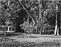 COLLECTIE TROPENMUSEUM Een waringin voor een prieel in de tuin van het paleis van de Gouverneur-Generaal in Buitenzorg. TMnr 60002082.jpg
