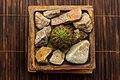 Cactus in clay pot.jpg