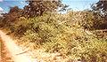 Camino Floresta Bolivia.jpg