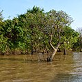 Canal to Tonle Sap Lake, Siem Reap, Cambodia - panoramio.jpg