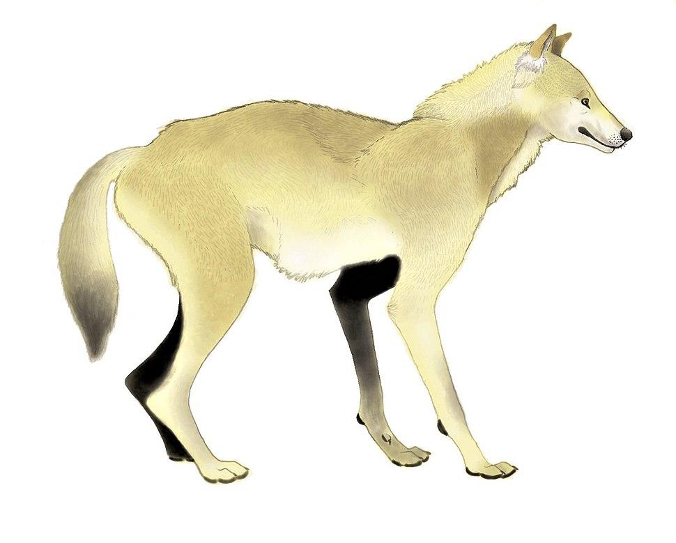 Canis etruscus restoration