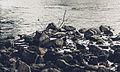 Cannon River (16320342169).jpg